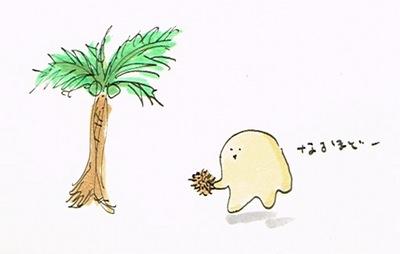 椰子が洗いやすい秘密