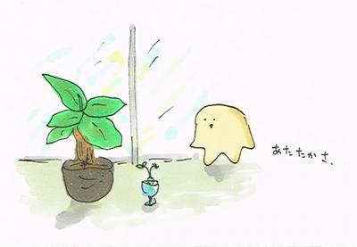 冬眠しない植物