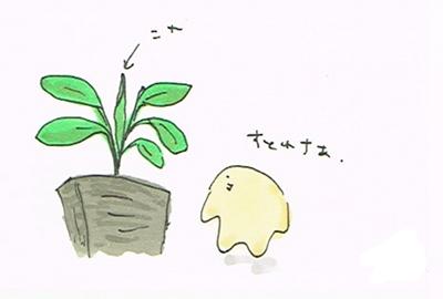 植物は意外と生きている