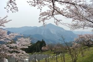 奥武蔵丸山~日向山_桜満開の季節にまた迷い道。