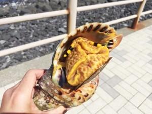 八丈島2016GW3日目_謎の虎ツノ貝