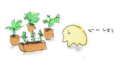 留守中の植物の水問題