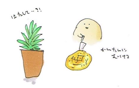 パイナポー栽培