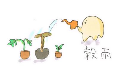 穀雨なので植物を植えたいが。