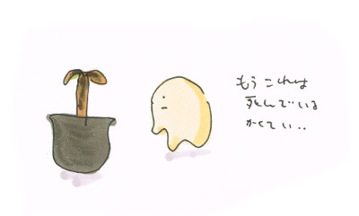 ミニバナナの生死