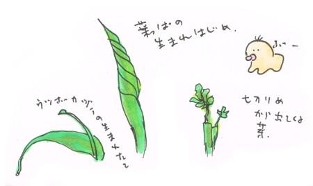 葉が伸びまくる初夏