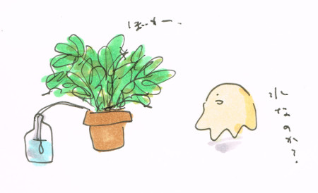 植物の水やり加減
