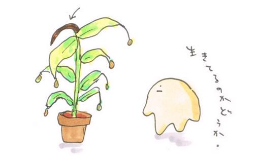 植物の生死判定