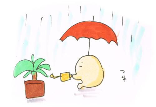 梅雨の水やり