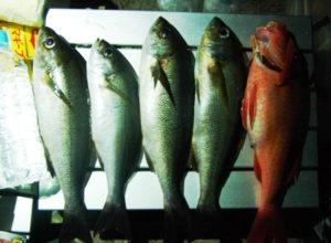 式根島2018年7月_2日目_昼、魚をすくい、夜、イサキを釣る