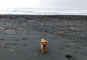 大島2018_9月_2日目_釣れないので弘法浜で遊ぶ