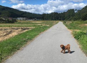 日帰り犬連れ車旅_八ヶ岳周辺をお散歩する旅