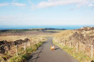 大島2018年11月2回目_1日目_三原山の火口まで登る