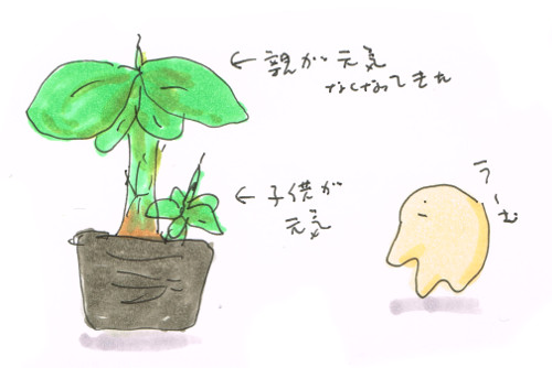バナナの水吸芽
