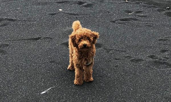 新ブログ「旅犬日記」のお知らせ