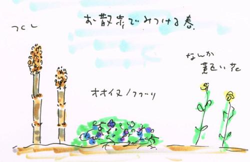 オオイヌノフグリ