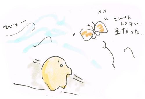 風で登る蝶