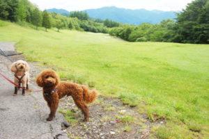 犬連れゴルフ&キャンプ2019年7月_1_きぬがわ高原CCで親子再会