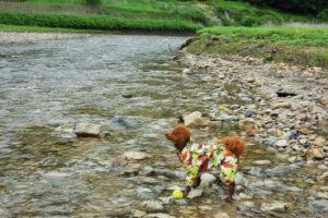 犬連れゴルフ&キャンプ2019年7月_4_雨と昼寝と川と温泉