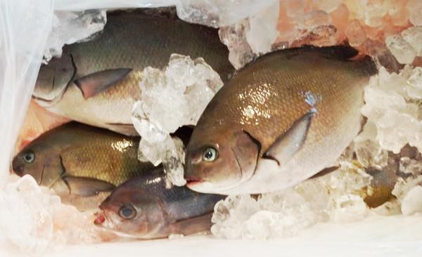 実家にて送った魚を食べたら美味しすぎた