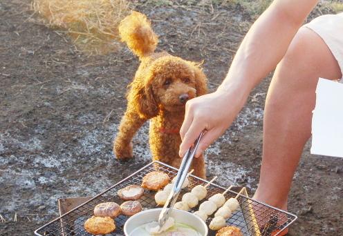 大島2019年9月_1日目_まさかの犬禁止キャンプ場からのいつものキャンプ場