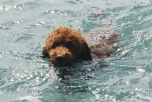 大島2019年9月_2日目_弘法浜で泳ぐ