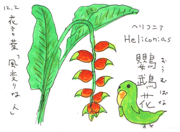 確かに変な形「ヘリコニア(鸚鵡花)」_12月2日誕生花