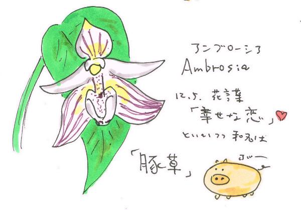 幸せな恋といいつつ豚草「アンブローシア」_12月5日誕生花