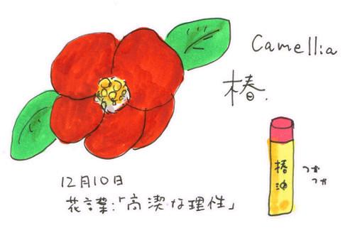 種類豊富な「椿」_12月10日誕生花