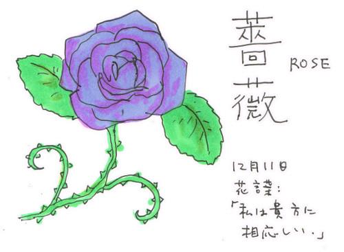 上から目線!「薔薇」_12月11日誕生花