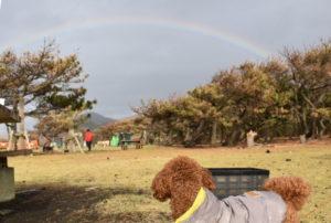 大島2019年11月_2日目_完璧な虹