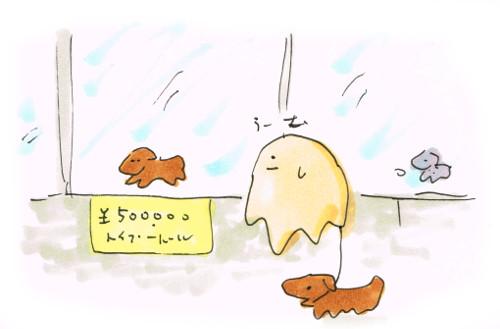 50万円の犬
