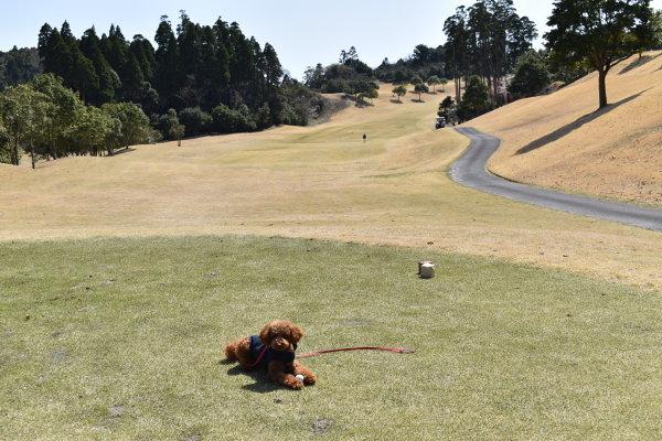 犬連れゴルフ&キャンプ2020年3月_2日目_1_ABCいすみゴルフコース