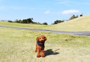 犬連れゴルフ&キャンプ2020年4月_1日目_1_ABCいすみゴルフコース