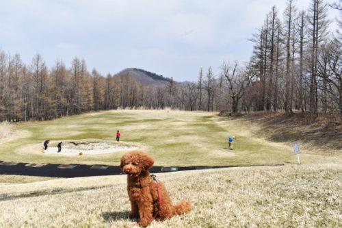 犬連れゴルフ2020年4月_1日目_1_きぬがわ高原カントリークラブ