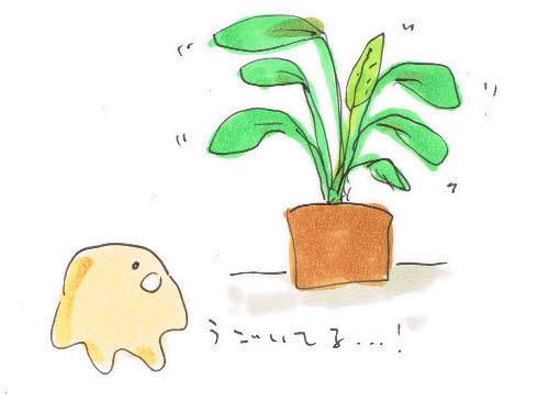 植物が動く