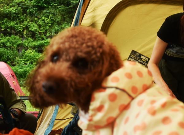 犬連れゴルフ&キャンプ2020年7月_3日目_濡れた撤収