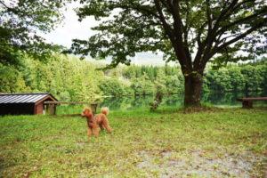 東北旅2020年8月_1日目_2_古竜湖キャンプ場でなぜか海鮮焼