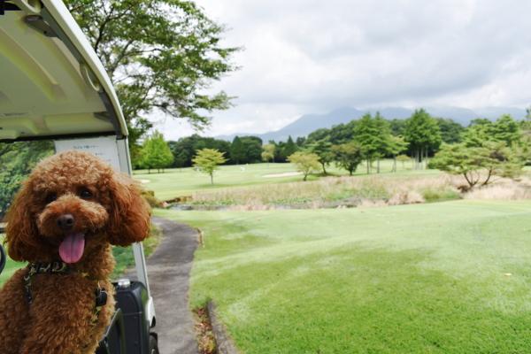 東北旅2020年8月_4日目_2_25那須ゴルフガーデンで犬連れゴルフ