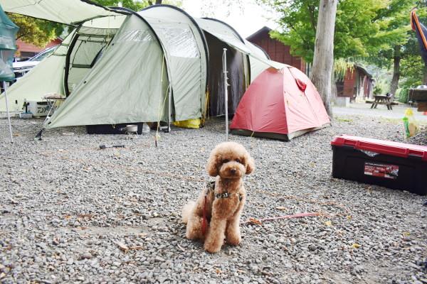 西湖キャンプ2020年_2日目_1_りつりんも朝のティラピス