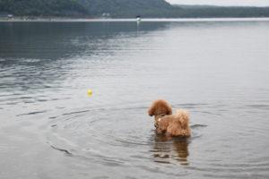 西湖キャンプ2020年_3日目_1_西湖でボール遊び