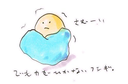 寒くても風邪ひかない今年