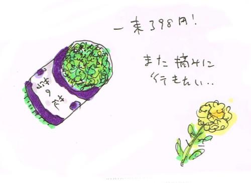 菜の花の後悔