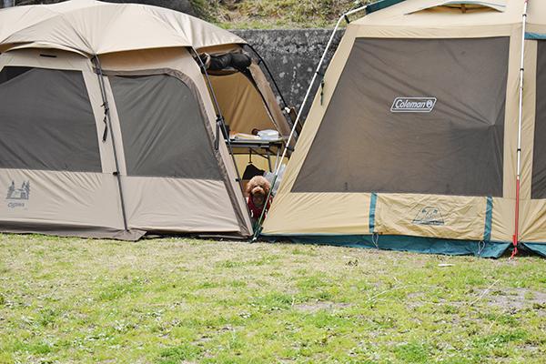 犬連れゴルフ&キャンプ2021年3月_2日目_山登り散歩