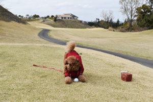 犬連れゴルフ&キャンプ2021年3月_1日目_1_ABCいすみゴルフコース