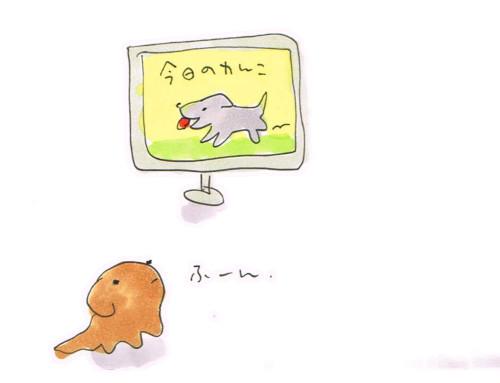 犬のテレビ