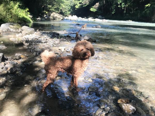 飯能河原で水遊び