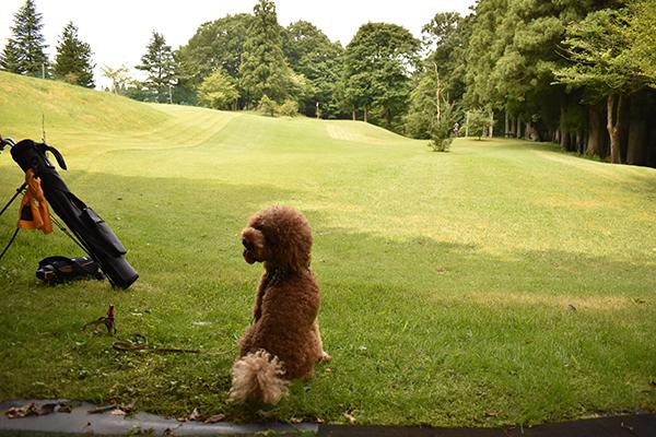 那須キャンプ2021年7月_1日目_2_犬連れゴルフショートコース