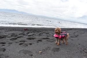 伊豆大島2021年8月_1日目_2_野田浜泳ぎ釣りと難航する食料調達